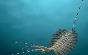 الصورة: بالفيديو..  أدمغة مجمدة لوحوش بحرية مرعبة عمرها نصف مليار سنة تذهل العلماء