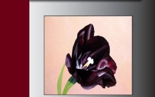 الصورة: الصورة: «الزنبقة السوداء»   عظمة الحب