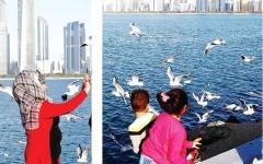 الصورة: النوارس تهدي زوار شواطئ أبوظبي عشرات الصور