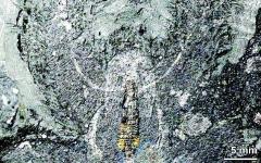 الصورة: أدمغة مجمدة من نصف مليار سنة في غرينلاند