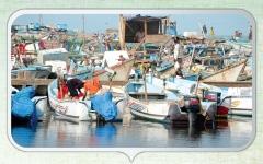 الصورة: تنظيم الصيد