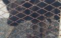 الصورة: شرطة الفجيرة تكشف تفاصيل تعرض طفل مواطن لهجوم من كلاب مفترسة