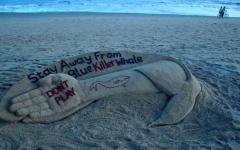 """الصورة: ماذا طلب مشرف """"الحوت الأزرق"""" من مراهق لبناني؟"""