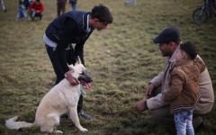 الصورة: جدل بشأن حملة لقتل الكلاب الضالة
