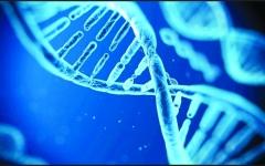 الصورة: تكنولوجيا النانو تحسّن فرص حفظ الأعضاء البشرية