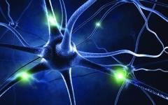 الصورة: تقنية تساعد على إعادة بناء الدماغ وسلسلة الخلايا العصبية