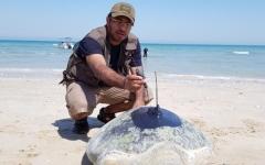 الصورة: ترقيم 475 سلحفاة خضراء على شواطئ رأس الخيمة