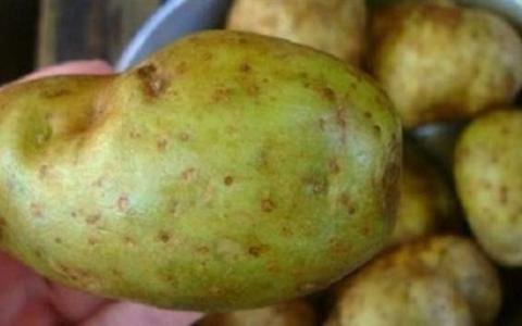 الصورة: تحذير من تناول البطاطس التي تحتوي على هذه العلامات