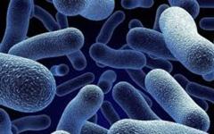 الصورة: نتائج معملية تؤكد وجود فيروس ليستريا المميت في مصنع أغذية