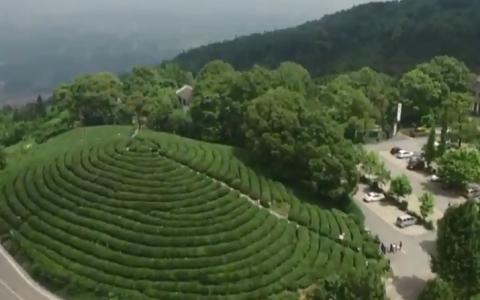 الصورة: قطف الشاي في مزارع غابات تشاشنينهاي الصينية