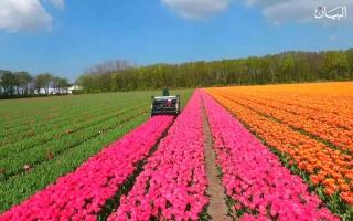 الصورة: رحلة الورود.. دبي تزاحم الكبار في سوق يقدر بـ 4.7 مليار دولار