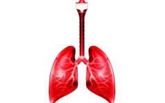الصورة: مواد التنظيف قد تؤثر سلباً على وظائف الرئة عند النساء