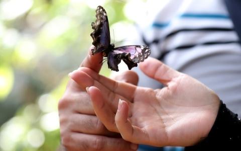 الصورة: حديقة الفراشات