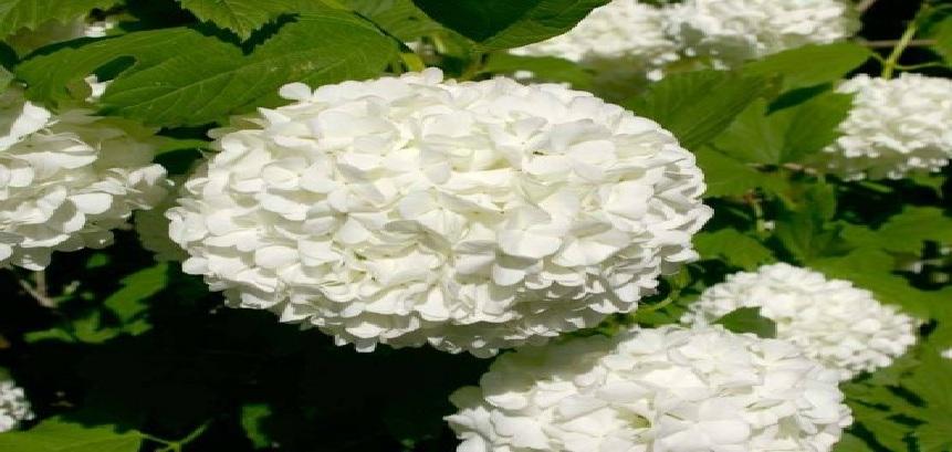 تعرف إلى الزهرة التي استخدمت في إعداد كعكة الزفاف الملكي