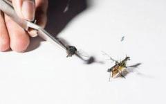 الصورة: «روبوفلاي» الحشرة الطائرة الآلية اللاسلكية