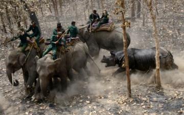 الصورة: وحيد قرن يفتك بحياة صياد في نيبال