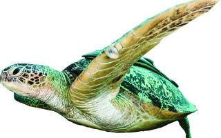 الصورة: «دبي للغوص التطوّعي»أمل بيئي في أعماق البحار