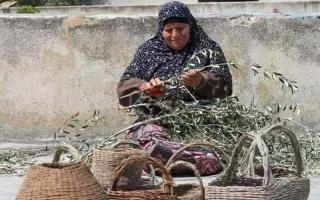 الصورة: فلسطينيات يصنعن من أغصان الزيتون أواني وسلالاً