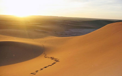 الصورة: آسيوي يسرق 10 محال ويخفي الحصيلة في الصحراء