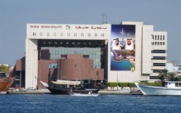 الصورة: بلدية دبي: لا شكاوى عن مهاجمة غربان الحدائق للجمهور