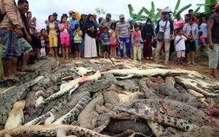 الصورة: مذبحة تماسيح انتقاماً لمقتل شخص