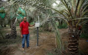 الصورة: «بلاتفورم» الإماراتية تطوّر نظام «نخيل» الذكي لكشف السوسة الحمراء