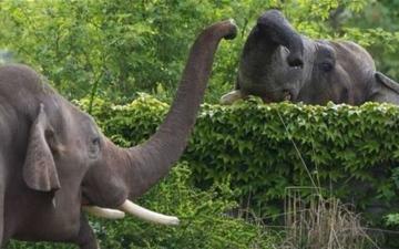 الصورة: فيل يلتقط طفلاً بخرطومه ويقتله