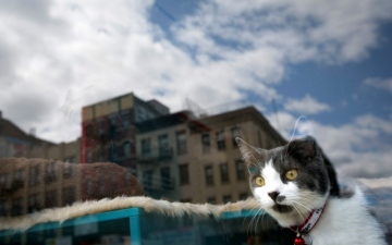 الصورة: واشنطن تحتاج 3 سنوات لتحصي قططها