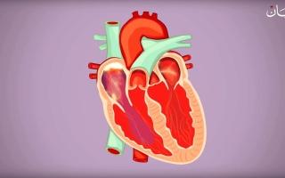 الصورة: 10 معلومات عن مسارات الكهرباء الضارة في القلب