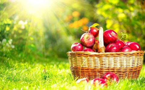 الصورة: مواد غذائية تبطئ الشيخوخة