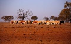 الصورة: أكبر ولاية أسترالية تعاني بالكامل من الجفاف الشديد