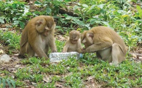 الصورة: القردة تؤجج الحرب على النفايات البلاستيكية