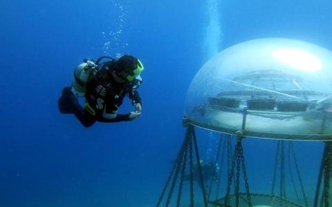 الصورة: أول حديقة نباتية تحت الماء