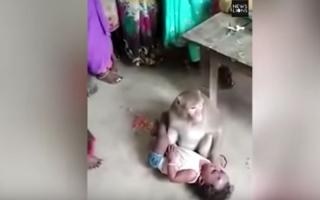 الصورة: شاهد.. قرد يخطف طفلاً من والديه