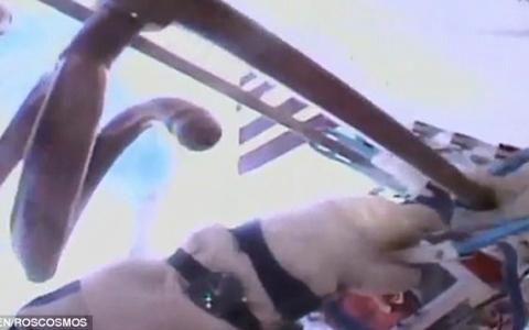 الصورة: رائدا فضاء روسيان ينهيان مهمة سير في الفضاء استغرقت 8 ساعات