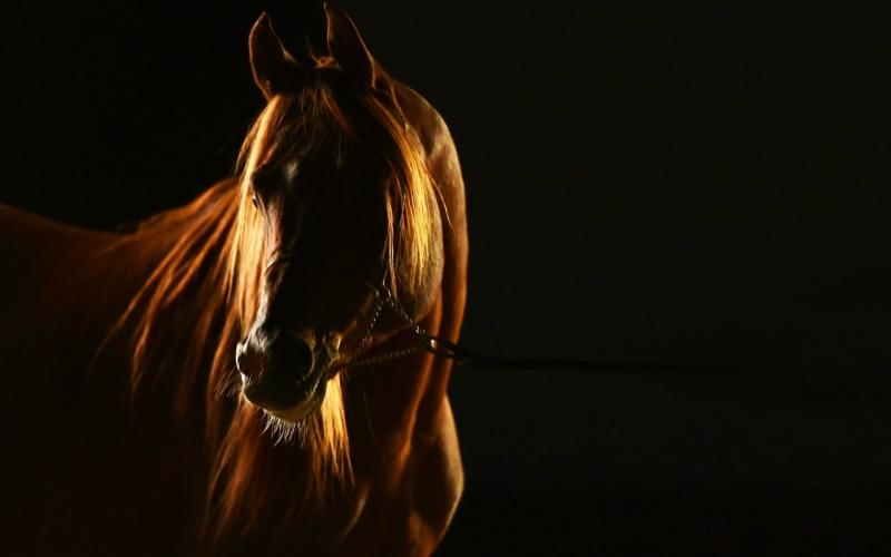 الصورة: إعلان الفائزين بـ«ضوء» جائزة حمدان للتصوير