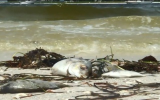 الصورة: شاهد ما فعله المدّ الأحمر بالبيئة البحرية