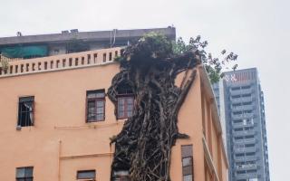 الصورة: بالصور.. نمو أشجار في جدران مبنى سكني!