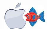 الصورة: الصورة: السمكة الصغيرة تأكل تفاحة أبيها