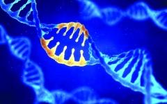الصورة: موافقة أميركية للتدخل في الجينات