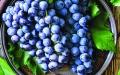 الصورة: العنب الأسود يقي من تصلب الشرايين