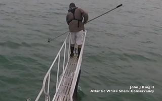 الصورة: مقتل شخص إثر هجوم لسمكة قرش على سواحل الولايات المتحدة