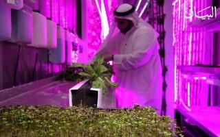 الصورة: في الإمارات.. رواج الزراعة في الحاويات يدعم الأمن الغذائي