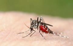 الصورة: خوارزميات ضد البعوض