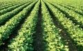الصورة: الصورة: استثمارات الإمارات الزراعية سلة غذاء عالمية
