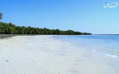 الصورة: زايد وأشجار القرم.. معركة خضراء في مياه البحر
