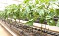 الصورة: الصورة: الزراعة تكافح شح المياه وغزارة «المستورد»