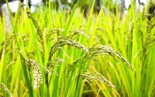 الصورة: الصورة: تجارة الأرز.. من الأرض إلى المائدة عبر موانئ دبي