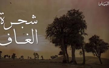 """الصورة: """"شجرة الغاف"""" تاريخ من الأمجاد والحكمة"""