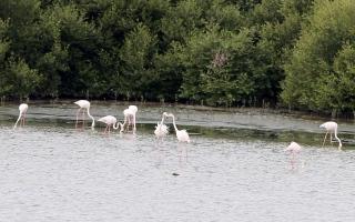 الصورة: الصورة: محمية الزوراء في عجمان.. واحة للطيور المهاجرة